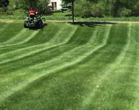 lawn care - Lawncare