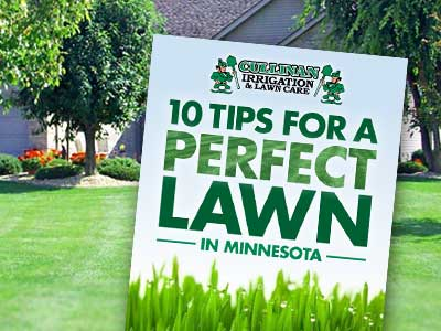 10 Tips for a perfect lawn